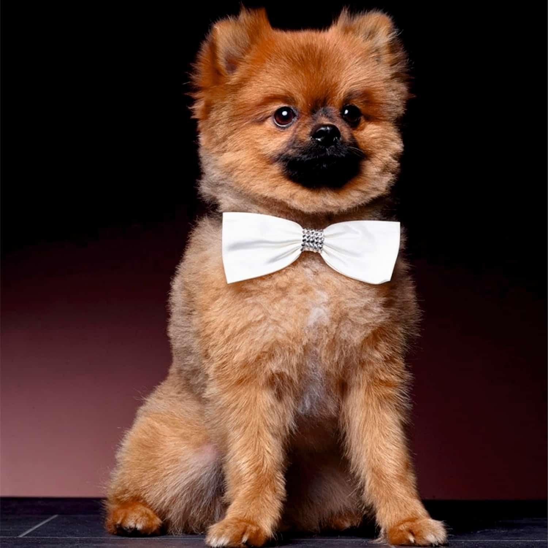 Ringaanhangers voor honden POISAM02-40LRvierk