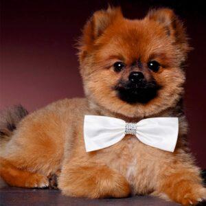 Ringaanhangers Strikje voor honden POISAM022-40LRvierk
