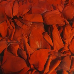 Bloemblaadjes Gevriesdroogde Rode Rozen